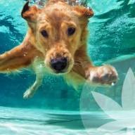 5 Möglichkeiten, Dein Haustier im Sommer abzukühlen